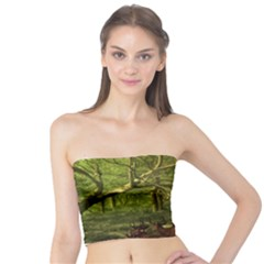 Red Deer Deer Roe Deer Antler Tube Top