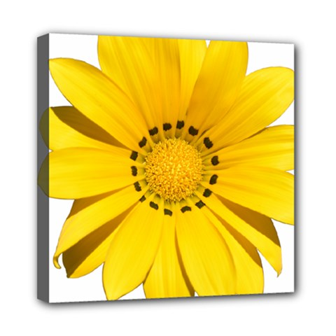 Transparent Flower Summer Yellow Mini Canvas 8  x 8