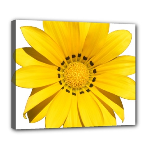 Transparent Flower Summer Yellow Deluxe Canvas 24  x 20