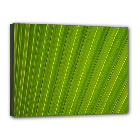 Green Leaf Pattern Plant Canvas 16  x 12