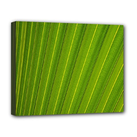 Green Leaf Pattern Plant Deluxe Canvas 20  X 16