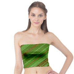 Stripes Course Texture Background Tube Top