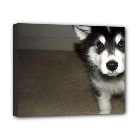 Alaskan Malamute Pup 3 Canvas 10  x 8