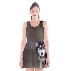 Alaskan Malamute Pup 3 Scoop Neck Skater Dress