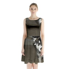 Alaskan Malamute Pup 3 Sleeveless Chiffon Waist Tie Dress