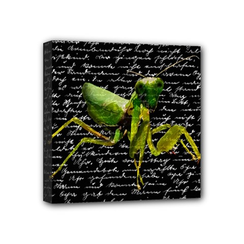 Mantis Mini Canvas 4  x 4