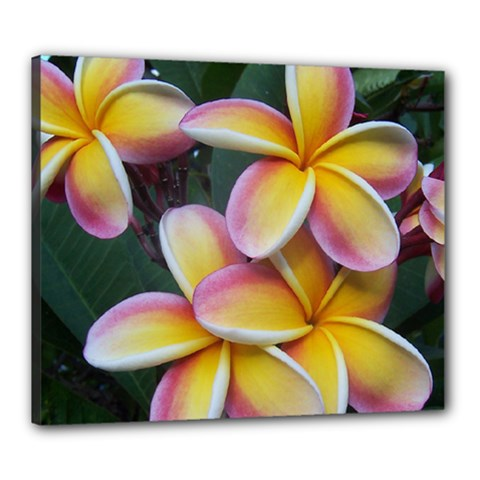 Premier Mix Flower Canvas 24  x 20