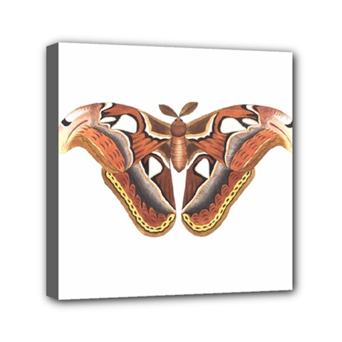 Butterfly Animal Insect Isolated Mini Canvas 6  X 6