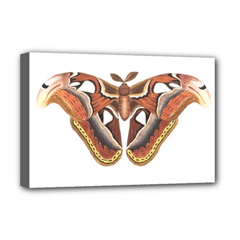 Butterfly Animal Insect Isolated Deluxe Canvas 18  x 12