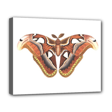 Butterfly Animal Insect Isolated Deluxe Canvas 20  x 16