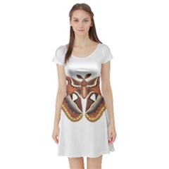 Butterfly Animal Insect Isolated Short Sleeve Skater Dress
