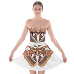 Butterfly Animal Insect Isolated Strapless Bra Top Dress