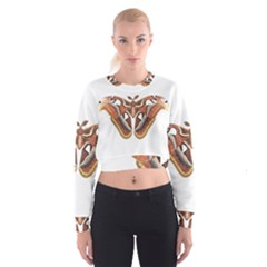 Butterfly Animal Insect Isolated Women s Cropped Sweatshirt
