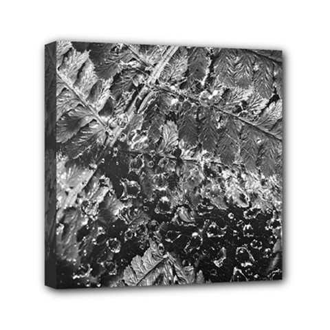 Fern Raindrops Spiderweb Cobweb Mini Canvas 6  x 6
