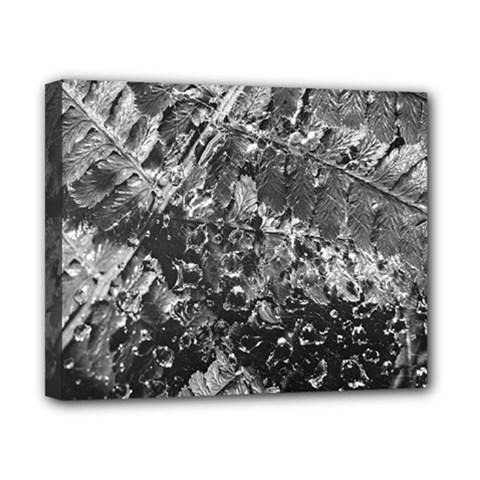 Fern Raindrops Spiderweb Cobweb Canvas 10  X 8