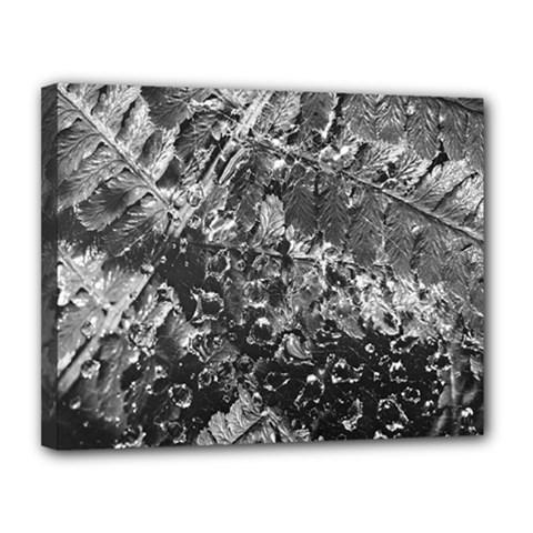 Fern Raindrops Spiderweb Cobweb Canvas 14  x 11