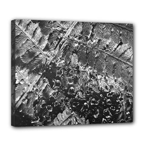 Fern Raindrops Spiderweb Cobweb Deluxe Canvas 24  x 20