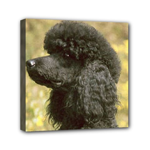 Poodle Love W Pic Black Mini Canvas 6  x 6