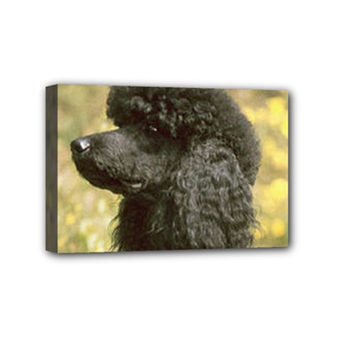 Poodle Love W Pic Black Mini Canvas 6  x 4