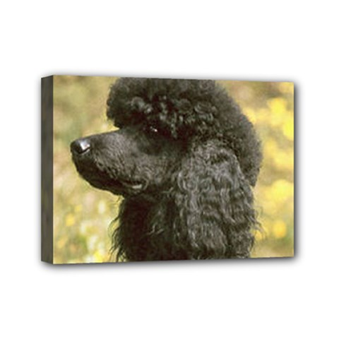 Poodle Love W Pic Black Mini Canvas 7  x 5