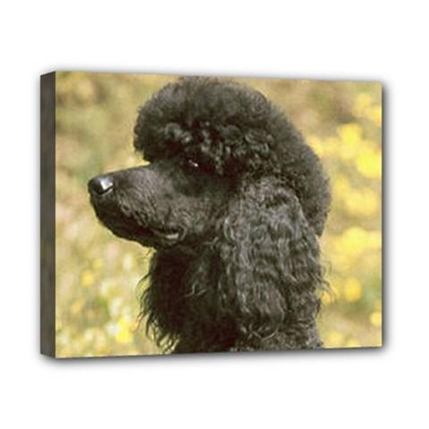 Poodle Love W Pic Black Canvas 10  x 8