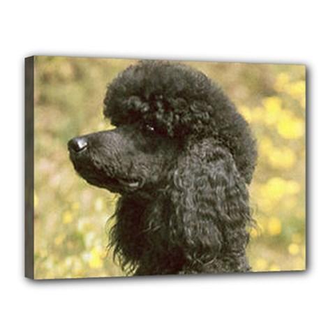Poodle Love W Pic Black Canvas 16  x 12