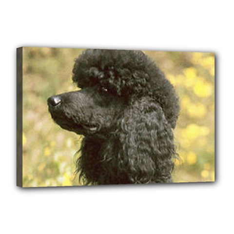 Poodle Love W Pic Black Canvas 18  x 12