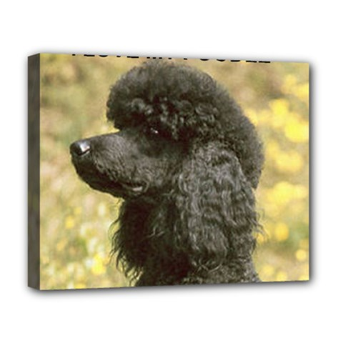 Poodle Love W Pic Black Deluxe Canvas 20  x 16