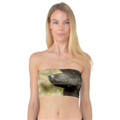Poodle Love W Pic Black Bandeau Top