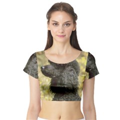 Poodle Love W Pic Black Short Sleeve Crop Top (Tight Fit)