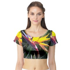 1 Short Sleeve Crop Top (Tight Fit)