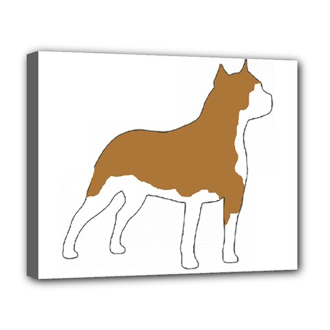 American Staffordshire Terrier  Silo Color Deluxe Canvas 20  x 16