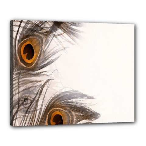 Peacock Feathery Background Canvas 20  X 16
