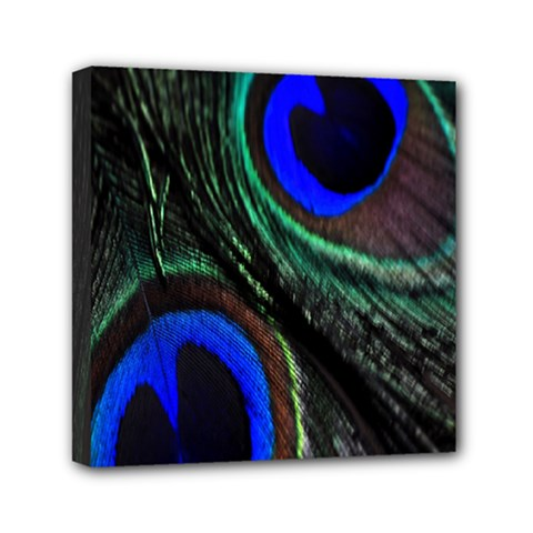 Peacock Feather Mini Canvas 6  X 6