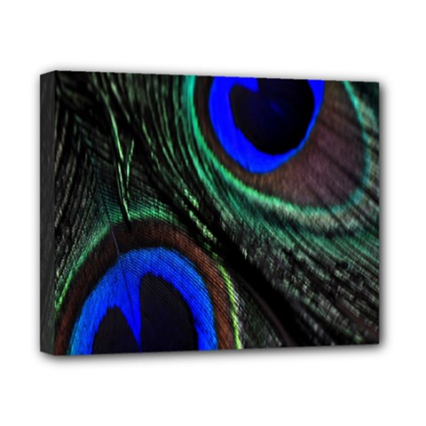 Peacock Feather Canvas 10  X 8