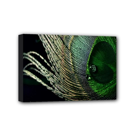Feather Peacock Drops Green Mini Canvas 6  x 4