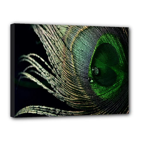 Feather Peacock Drops Green Canvas 16  X 12