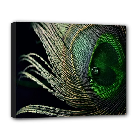 Feather Peacock Drops Green Deluxe Canvas 20  X 16