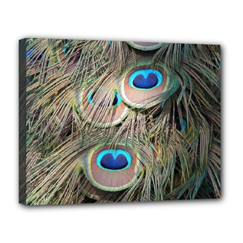Colorful Peacock Feathers Background Canvas 14  X 11