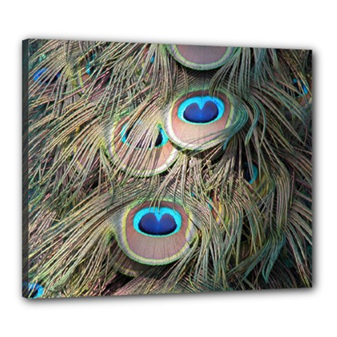 Colorful Peacock Feathers Background Canvas 24  X 20