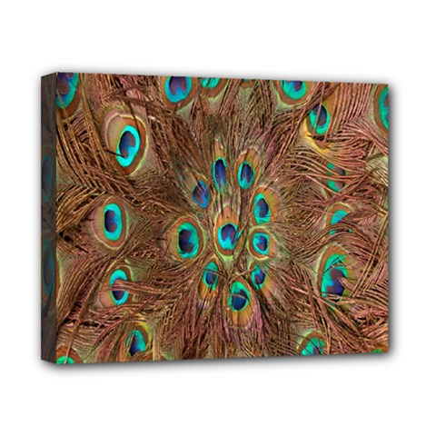 Peacock Pattern Background Canvas 10  X 8