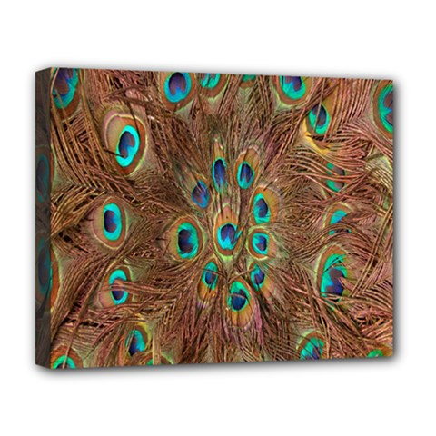 Peacock Pattern Background Deluxe Canvas 20  x 16
