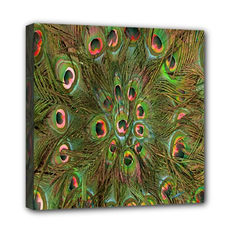 Peacock Feathers Green Background Mini Canvas 8  x 8