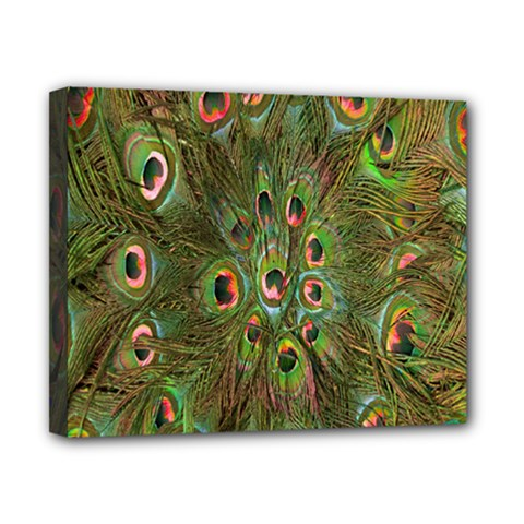 Peacock Feathers Green Background Canvas 10  X 8