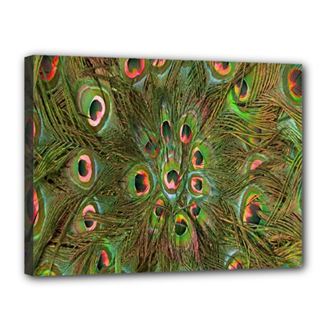 Peacock Feathers Green Background Canvas 16  X 12