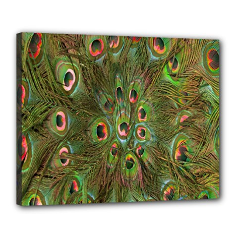 Peacock Feathers Green Background Canvas 20  x 16