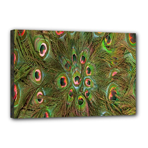 Peacock Feathers Green Background Canvas 18  X 12