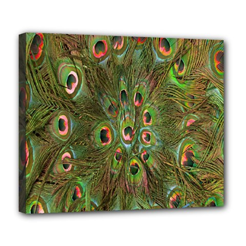 Peacock Feathers Green Background Deluxe Canvas 24  X 20