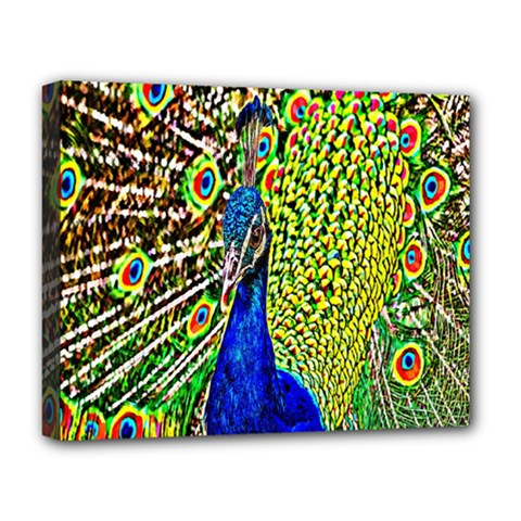 Graphic Painting Of A Peacock Deluxe Canvas 20  x 16