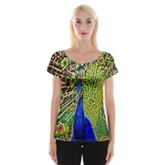 Graphic Painting Of A Peacock Women s Cap Sleeve Top